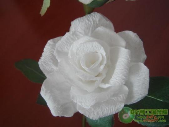 纸做的玫瑰花图片