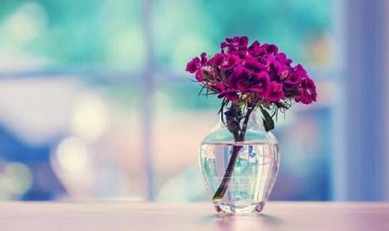 紫罗兰家纺:当花卉遇上天丝,瞬间被它的柔滑融化