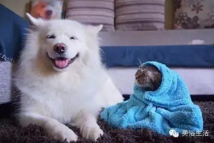 美浴生活:毛巾可以将就,毛巾也可以讲究!